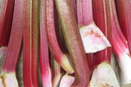 Harvest colour: rhubarb red