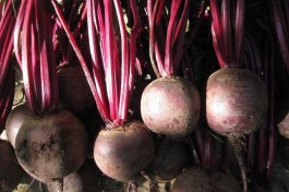 Harvest colour: beetroot reds