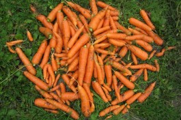 Harvest Colour: carrot orange